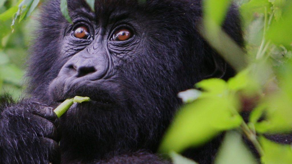 10 Safari Destinations in Africa