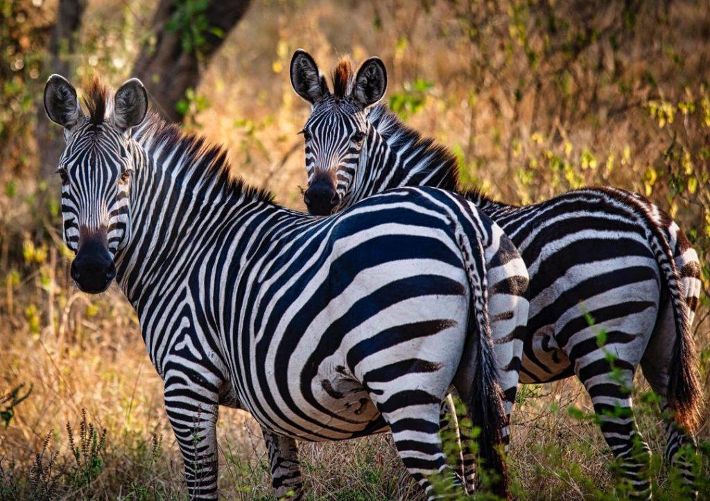 9 Days Wildlife Safari Uganda