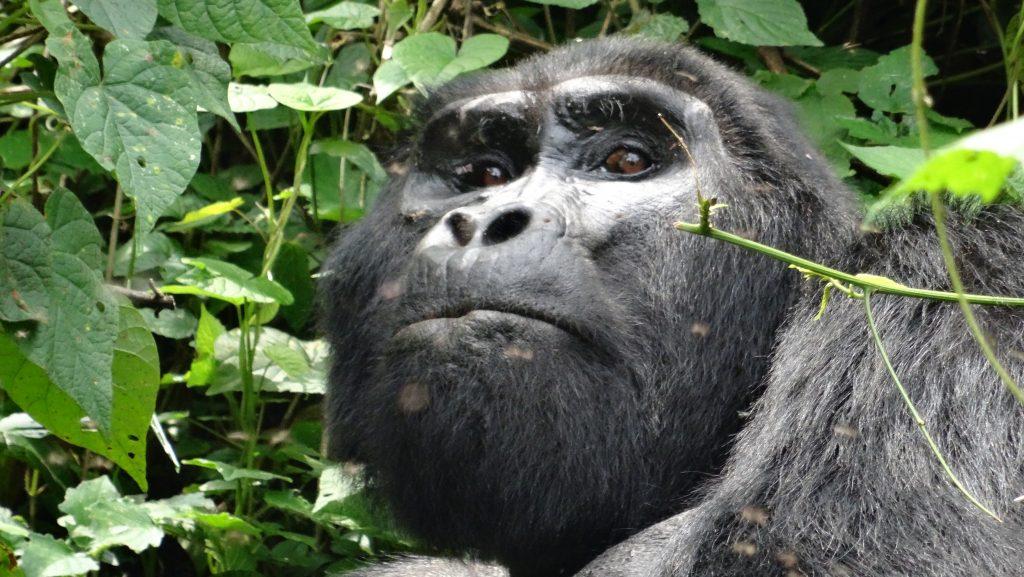10 Days Best Uganda Safaris