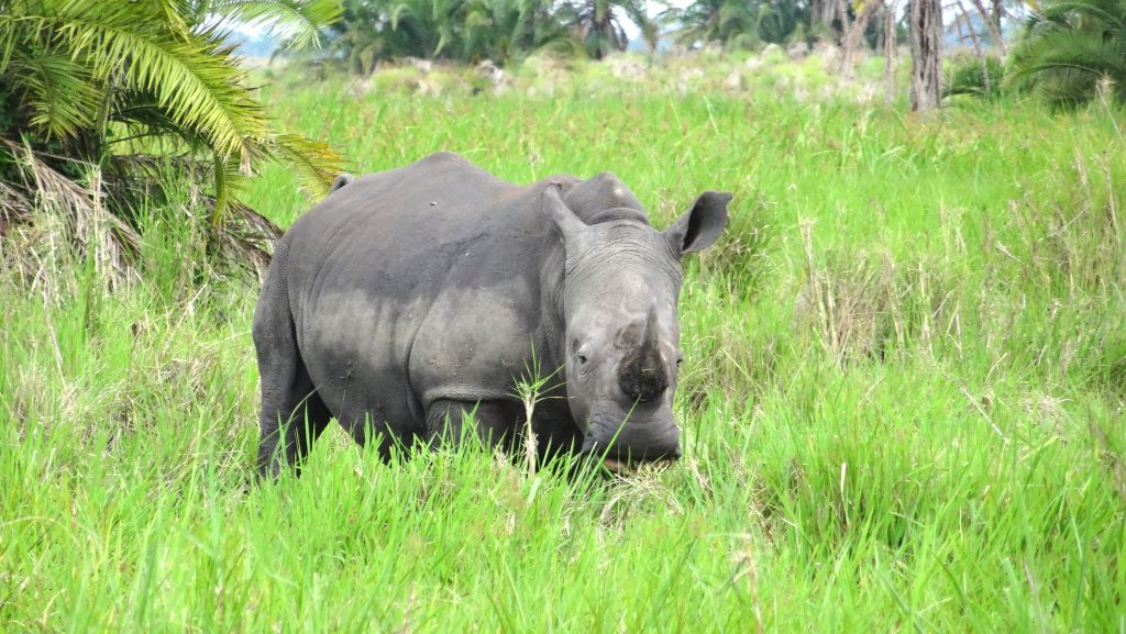 14 Days Uganda Safaris Holidays