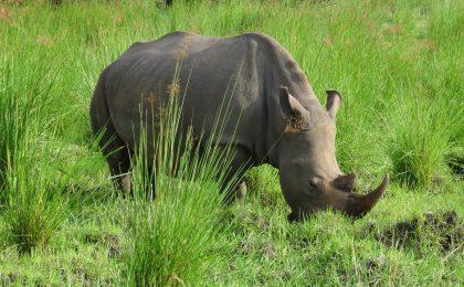 Adventure Uganda Safari