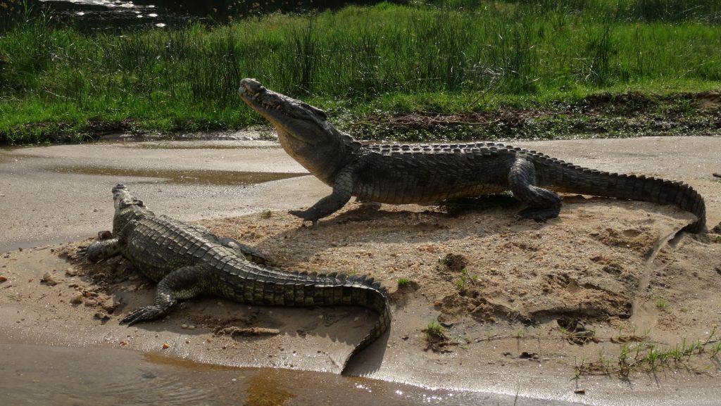 Murchison Fall National Park