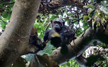 15 Days Adventure Uganda Safaris