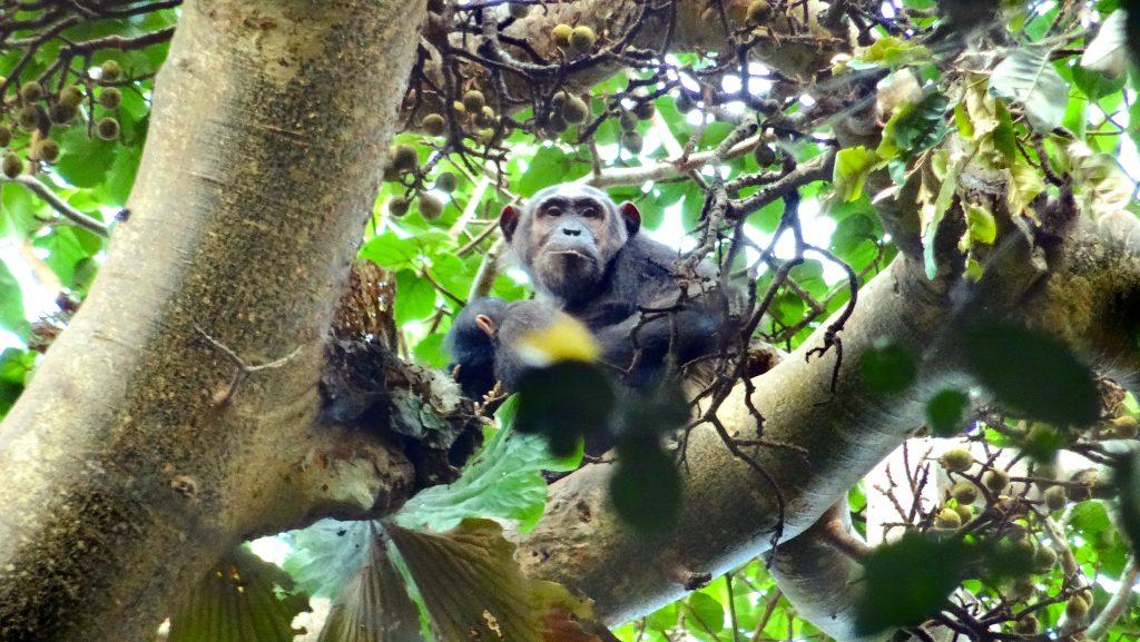 12 Days Affordable Gorilla Tours