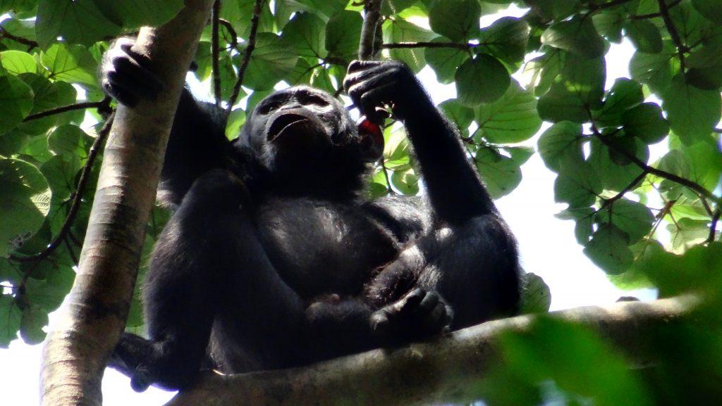 Uganda Rwanda Safari tours