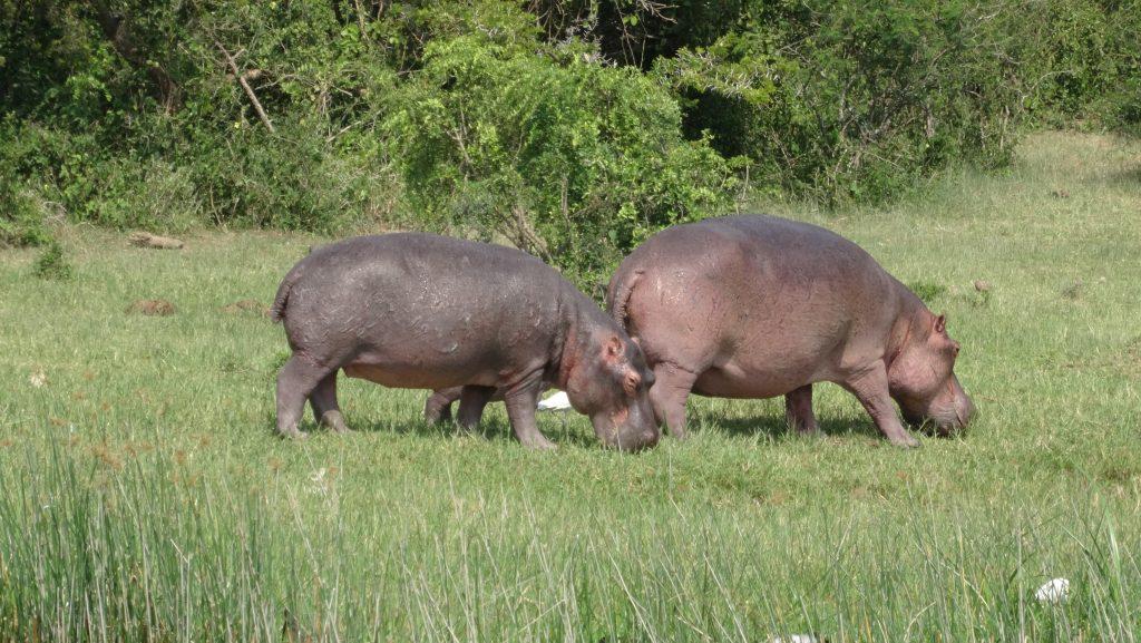 7 Days Flying Uganda Safaris