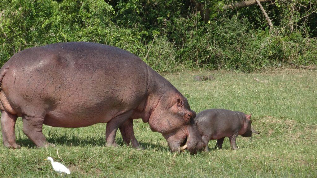 5 Days Uganda Safari Holidays