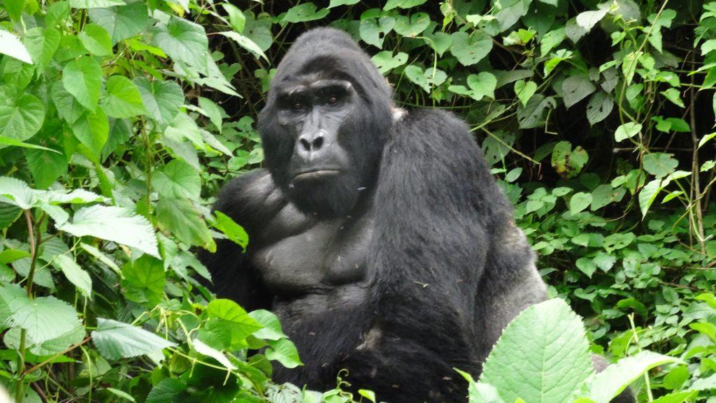 4 Days Uganda Wildlife Safari