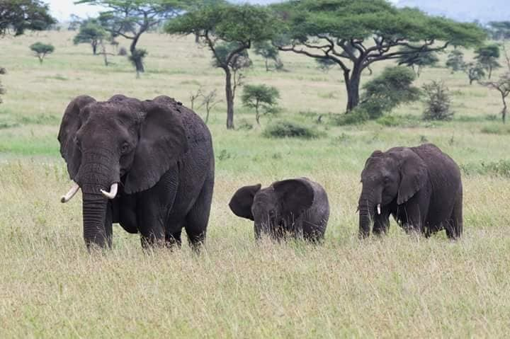 Affordable Uganda Safaris - 5 Days