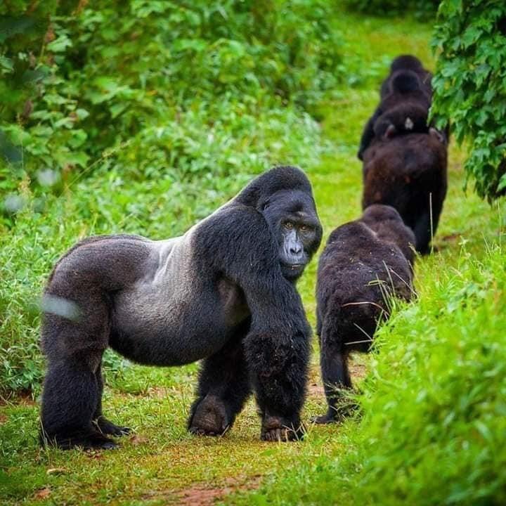 7 Days Rwanda Uganda Gorilla Trekking