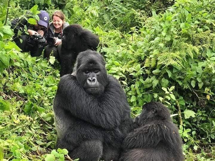 Uganda Gorilla Habituation Experience