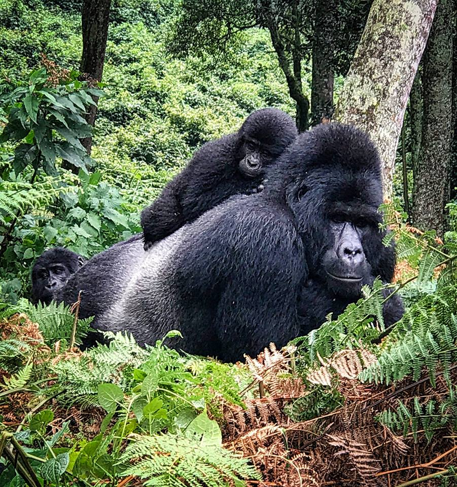 8 Days Rwanda Uganda Gorilla Safaris