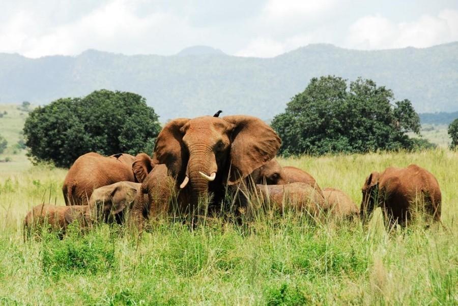 Flying Safari in Uganda - Uganda Safaris