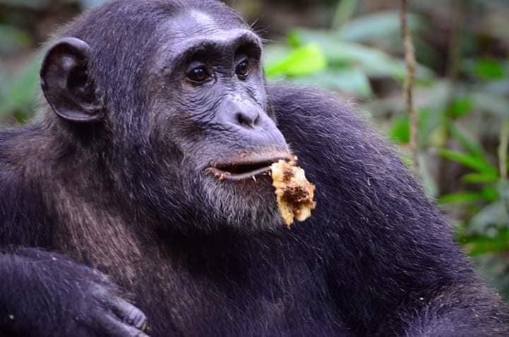 11 Days Affordable Gorilla Tours