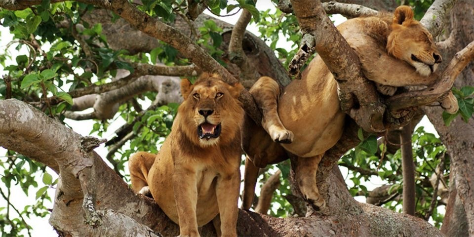 top Uganda Safari Packages