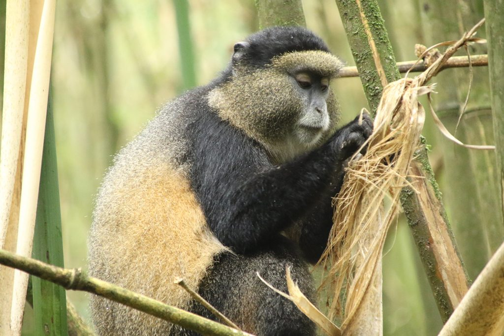 Affordable Primate Tours