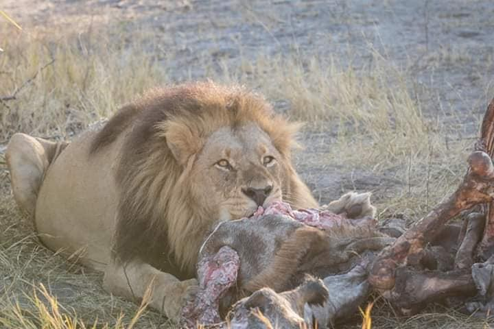 African wildlife holiday