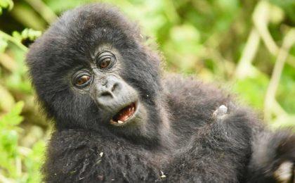 Best Season to Visit Rwanda